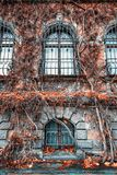 Incredibly fabulous walls of the Wroclaw National Museum are covered with wicker bushes, mystical windows. Scare passers-by royalty free stock photo