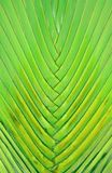 Natural Woven Pattern of a Decorative Palm Tree Royalty Free Stock Image