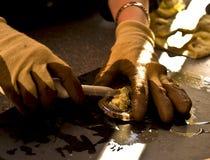 Incrinamento dell'ostrica Immagini Stock