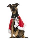 Incroci il cane che indossa un capo di natale, seduta, isolata Fotografie Stock Libere da Diritti