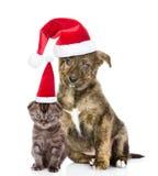 Incroci il cucciolo ed il piccolo gattino in cappelli rossi di Santa che si siedono insieme Isolato su bianco Fotografie Stock Libere da Diritti