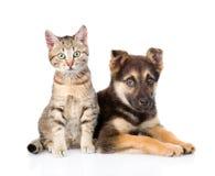 Incroci il gattino del soriano e del cane che esamina la macchina fotografica Isolato Fotografie Stock Libere da Diritti