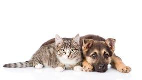 Incroci il gatto di soriano e del cane che si trova nella parte anteriore Fotografie Stock