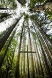Incrocio cristiano nel legno fotografia stock libera da diritti