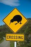 Incrocio del Kiwi Immagini Stock Libere da Diritti