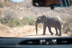 Incrocio dell'elefante Immagini Stock