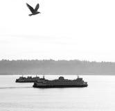 Incrocio di traghetto Immagini Stock