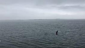 Incrocio di traghetto da Den Helder a Texel in HD Timelapse stock footage