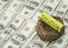 Incubated solution. Business concept. Nest with solution word on money background. Focus on nest Stock Photography