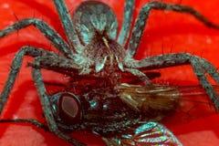 Incubo del ragno fotografia stock libera da diritti