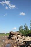 Indústria da madeira serrada imagens de stock royalty free