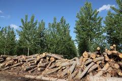 Indústria da madeira serrada fotos de stock