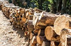 Indústria da silvicultura Remoção de árvores inoperantes e doentes foto de stock royalty free