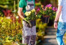 Indústria da venda das flores Foto de Stock Royalty Free