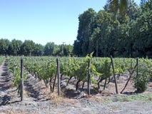 Indústria de vinho no Chile fotografia de stock