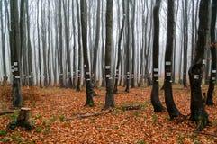 Indústria e registro de madeira Árvores etiquetadas imagem de stock royalty free