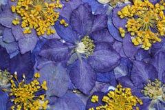Indaco e fondo giallo del fiore Fotografia Stock Libera da Diritti