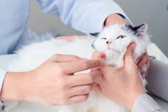 Indagine veterinaria Fotografie Stock Libere da Diritti