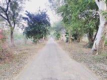 Indain树和在野餐期间-被夺取的森林视图 图库摄影