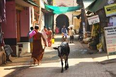 INDE DE GOKARNA KARNATAKA - 29 JANVIER 2016 : Vache indienne marchant par les rues avec des personnes dans la ville de Gokarna Photographie stock