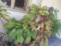 Inde de planète de jardin Image libre de droits