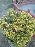 Inde naturelle de fleurs Image libre de droits