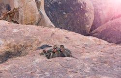 Inde rentrée par photo La famille de singe dort dans la montagne en Th Image libre de droits