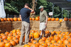 Indecisive Men Picking a Pumpkin Royalty Free Stock Image