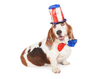 Independence Day Basset Hound Royalty Free Stock Images