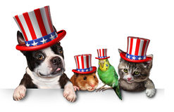 Independence Day Pets. Celebrating the United States fourth of july holiday with a dog cat bird and hamster wearing hats with the american stars and stripes Royalty Free Stock Images