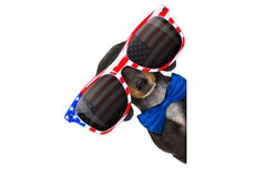 Independence day 4th of july dog Stock Image