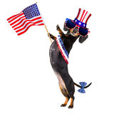 Independence day 4th of july dog. Dachshund susage dog waving a flag of usa and victory or peace fingers on independence day 4th of july,isolated on white Stock Photos