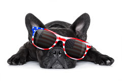 Independence day 4th of july dog. French bulldog dog celebrating  independence day 4th of july with  sunglasses,  isolated on white background Stock Photos
