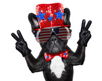 Independence day 4th of july dog Stock Images