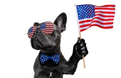 Independence day 4th of july dog. French bulldog waving a flag of usa and victory or peace fingers on independence day 4th of july with sunglasses royalty free stock photo
