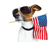 Independence day 4th of july dog Royalty Free Stock Photography