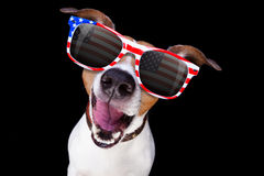 Independence day 4th of july dog. Jack russell dog shouting 4th of July on independence day, isolated on black dark background stock photography