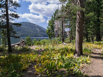 Independence Lake Trail Royalty Free Stock Images