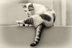 Independent beautiful lonely street cat Royalty Free Stock Photos