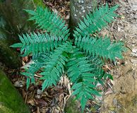 Independent fern leaves next to big tree Stock Photos
