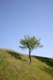 Independent tree Royalty Free Stock Photos