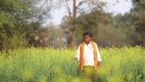 Indiański rolnik przy czarnej musztardy polem zbiory wideo