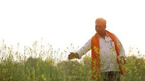 Indiański rolnik przy czarnej musztardy polem zdjęcie wideo