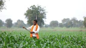 Indiański rolnik przy zielonym kukurydzanym polem zbiory