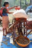 Indiańska kobieta używa specjalną maszynę szczotkować dokrętki betel palmy areki catechu obraz royalty free