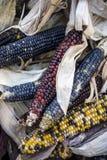 Indiańska kukurudza Fotografia Royalty Free