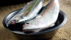 Indiańska makreli ryba zdjęcia royalty free
