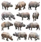 Indiańska nosorożec lub wielka uzbrajać w rogi nosorożec na białym tle Zdjęcia Royalty Free