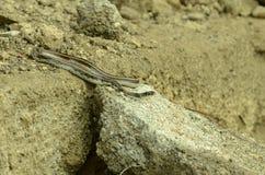 Indiańska wąż rzeka Zdjęcia Royalty Free