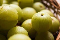 Indiański agrest lub owoc Amla lub avla, selekcyjna ostrość Obrazy Royalty Free